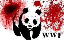 la sucia verdad sobre wwf la ong ecologista mas grande del mundo