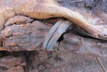 descubrimientos intrigantes de la necropolis de millones de momias en egipto reveladas