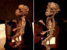 el extrano museo de merrylin y sus criaturas mitologicas