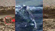 posible fosil extraterrestre hallado en marte