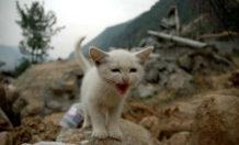 como los animales se anticipan a los desastres naturales