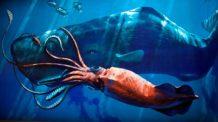 criaturas terribles calamares gigantes