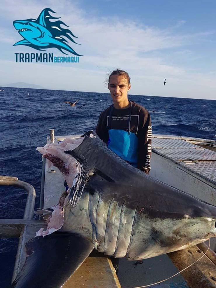 Hallan un enorme tiburón con la cabeza mordida por una bestia aún más grande en la costa de Australia