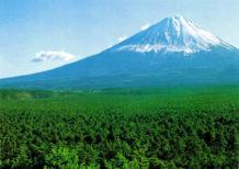 encuentros paranormales en el bosque de suicidios embrujados de japon