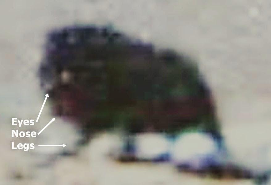 Extraña Criatura Oscura Fotografiada por el Opportunity Mars Rover