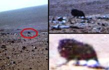 extrana criatura oscura fotografiada por el opportunity mars rover