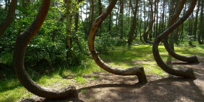 Hoia-Baciu el bosque embrujado de transilvania