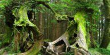 hoia baciu el bosque embrujado de transilvania