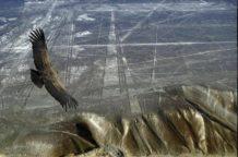 las lineas de palpa creadas mil anos antes que las lineas de nasca palpa nasca peru