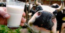 por que la leche pasteurizada esta destruyendo tu salud