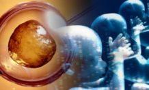 seres humanos transgenicos pueden ya ser posibles