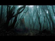 el bosque encantado de hoia baciu en rumania