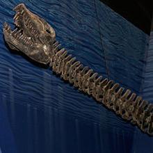 Hallan restos de una especie de «monstruo del lago Ness» de 15 toneladas en la Antártida
