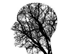 hay algo despues de la muerte para estos cerebros 36 horas de vida extra