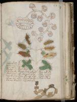 manuscrito voynich el libro mas enigmatico de la historia