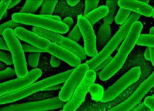 la amenaza de las superbacterias