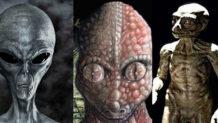 las tres especies extraterrestres mas influyentes en la tierra