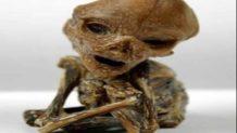 un cuerpo extraterrestre encontrado en puerto rico