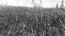 el evento tunguska arraso mas de 2 000 km cuadrados de tundra y derribo a personas caballos y carruajes