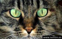 tu gato te esta volviendo loco esparciendo parasitos que controlan tu mente