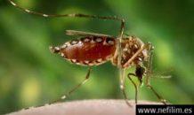 zika la nueva enfermedad que transmite el mosquito aedes aegypti