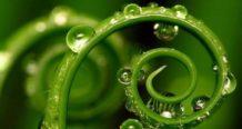 las plantas tienen nuestros cinco sentidos y quince mas