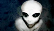 los grises la raza extraterrestre que mas contacto ha tenido con la humanidad