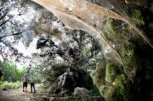 las misteriosas aranas gigantes del congo jba fofi