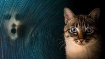 los gatos actuan como un escudo protector contra energias negativas