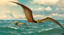 los pterodactilos aun siguen vivos
