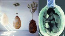 adios a los ataudes entierro ecologico que brinda vida a un nuevo arbol