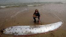 un monstruoso pez remo de 5 metros aparece en la costa de una isla de california