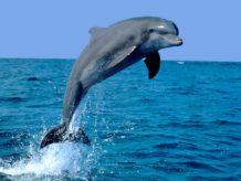 y si no fueramos los seres mas inteligentes de la tierra atencion a los delfines
