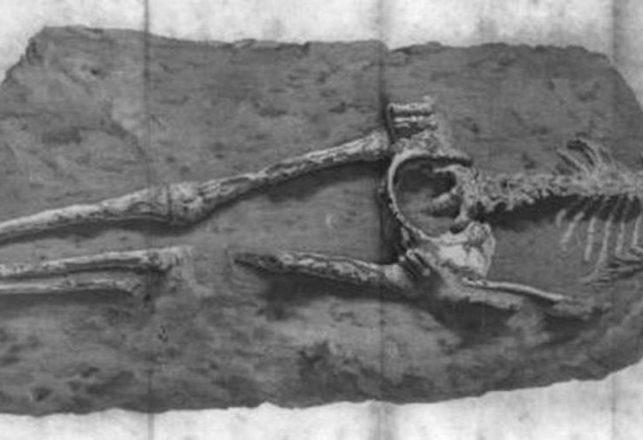El Misterio de la Mujer de Guadalupe, el Esqueleto en Roca