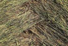 crop circles que hay detras de los circulos de cultivos