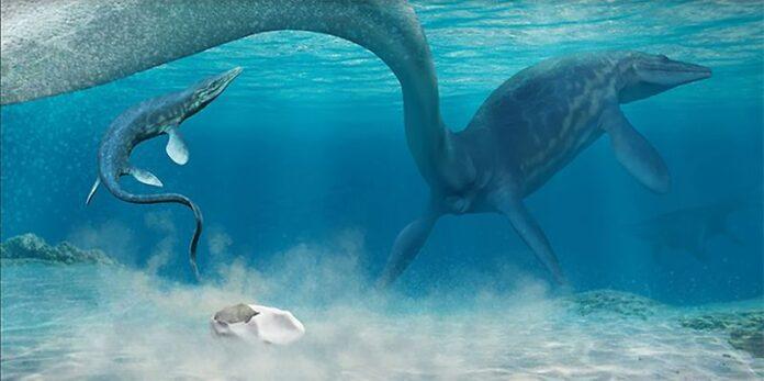 descubren a que especie corresponde un misterioso fosil hallado en la antartida