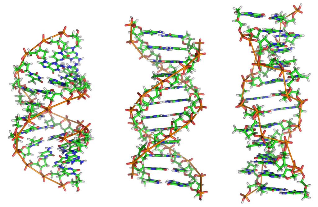 formas de adn a b y z