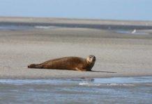miles de especies de animales estan huyendo hacia los polos en masa