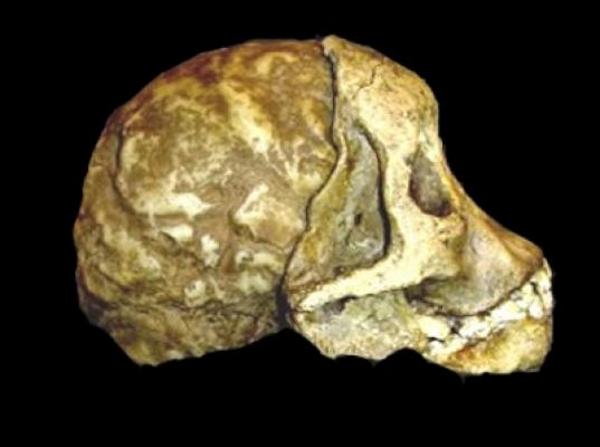 Nuevo análisis al misterioso niño de Taung revela que no era humano