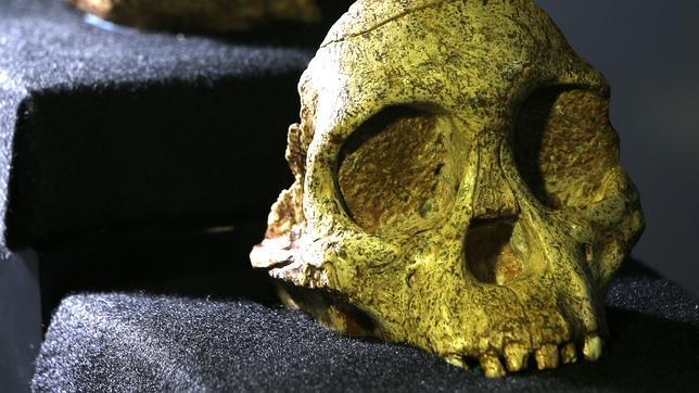 nuevo analisis al misterioso nino de taung revela que no era humano