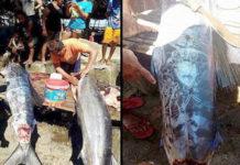 pescadores de filipinas pescan un extrano pez con extranos simbolos en el cuerpo