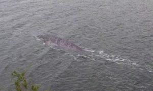 un residente del reino unido afirma haber fotografiado al monstruo del lago ness