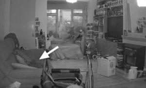 video el fantasma de un gato muerto vino al dueno