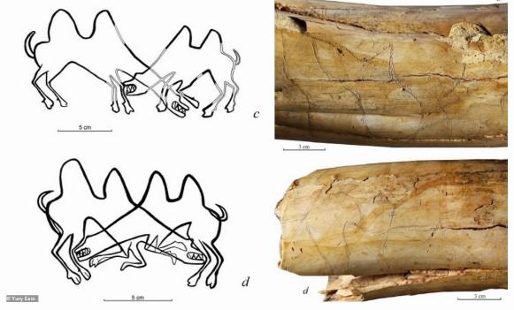 descubren imagenes de camellos grabadas en un colmillo de mamut de 13000 anos