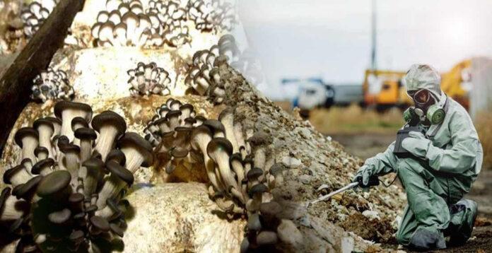 hongo que crece en chernobil podria proteger a astronautas de la radiacion del espacio