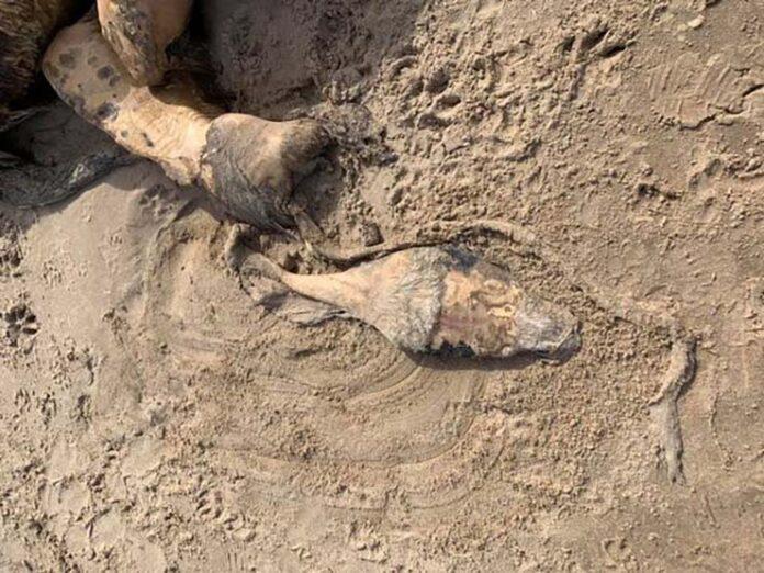 aparece una misteriosa criatura en una playa del reino unido y nadie sabe que es