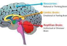 ocho rasgos reptilianos en humanos segun investigadores