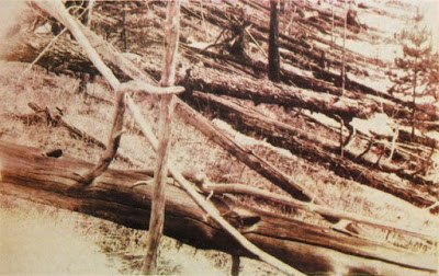 Tunguska_event_fallen_trees-640x403.jpg