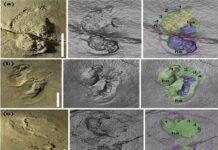 evolucion humana huellas antiguas en creta podrian reescribir la historia de nuestro origen