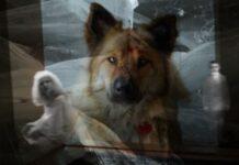 los animales y lo paranormal